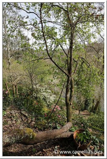 jardin priv un jardin en terrasse dans le finist re. Black Bedroom Furniture Sets. Home Design Ideas