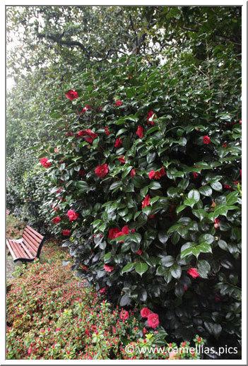 Visite - Le jardin des plantes de Nantes
